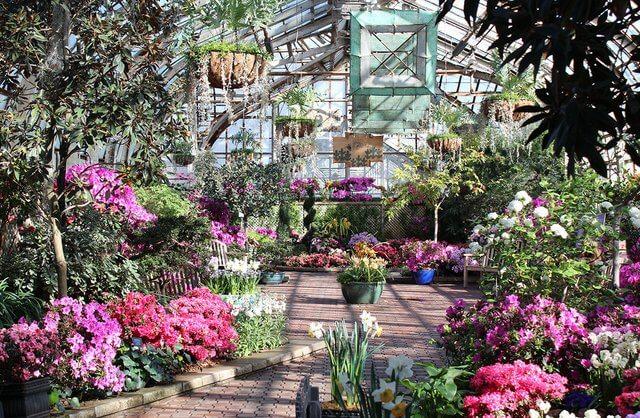 Una pequeña parte del conservatorio. Exposición de primavera.