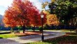 11 lugares para ver el mejor follaje de otoño en Chicago