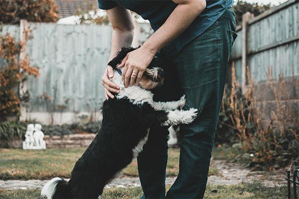 Mito del coronavirus, los perros y gatos pueden contagiarse