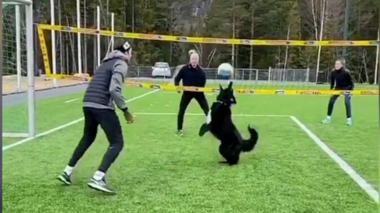 Perro sirve como compañero de voleibol durante la cuarentena COVID-19